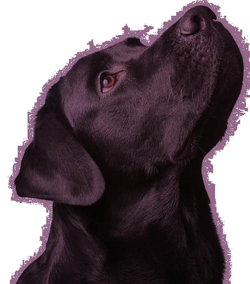 dog-banner.png