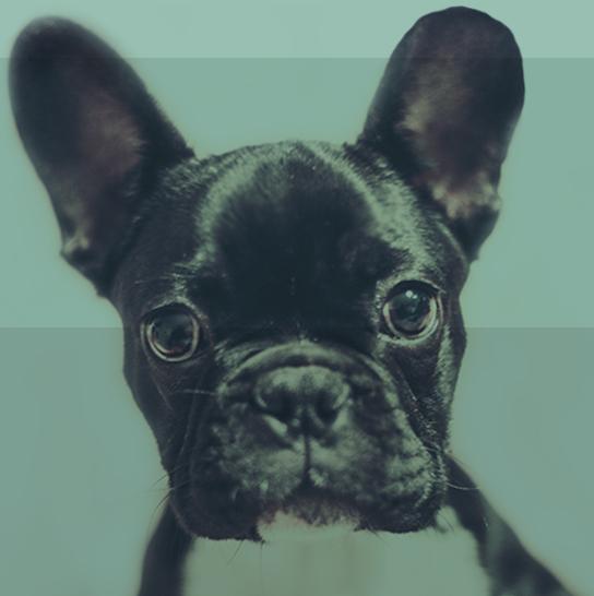 dog-footer.jpg
