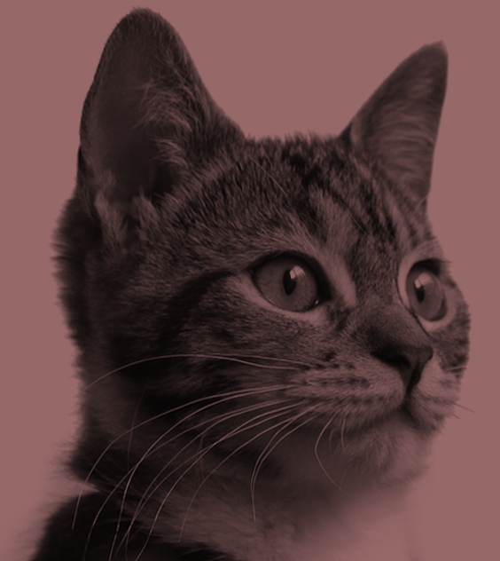 gato-banner.png